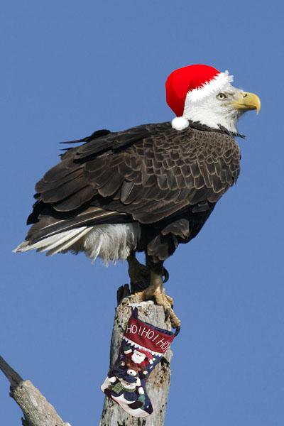 eaglechristmas